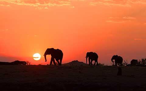 Drei Elefanten vor dem orangenen Sonnenuntergang in Afrika